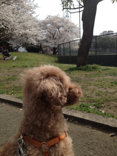 iphone/image-20130324155234.png