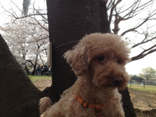 iphone/image-20130324155312.png