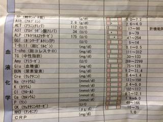 めり~の血液検査の結果